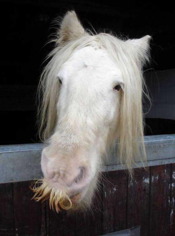 horses-moustaches (18)