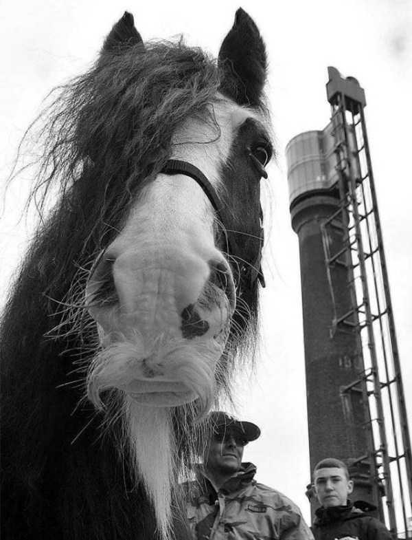 horses-moustaches (24)