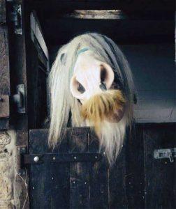 horses-moustaches (26)