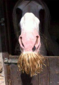 horses-moustaches (27)