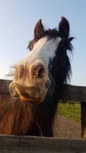 horses-moustaches (3)