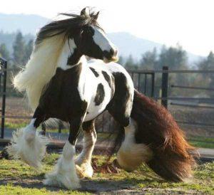 horses-moustaches (4)
