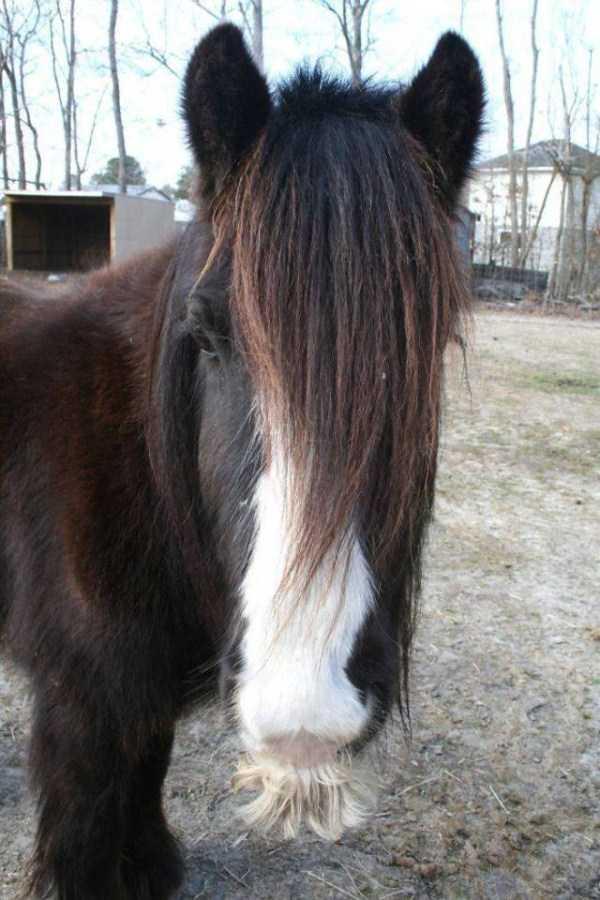 horses-moustaches (5)