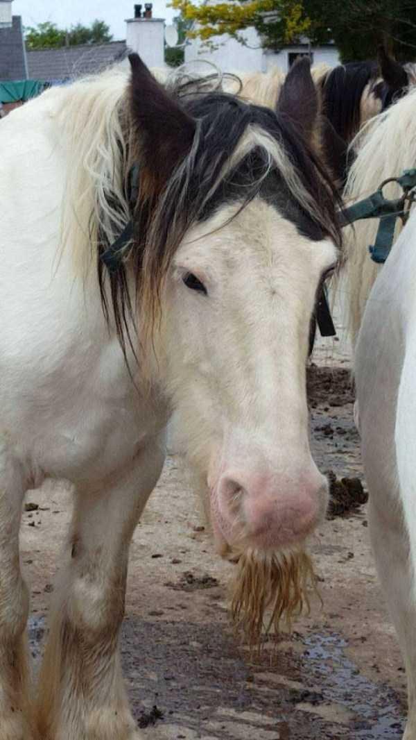 horses-moustaches (7)