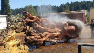 jeffrey-michael-samudosky-giant-octopus (2)