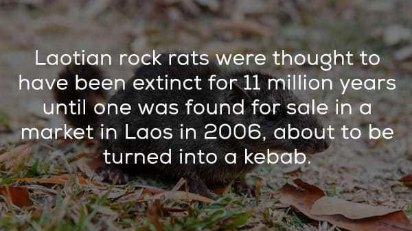 random-facts-klyker (18)