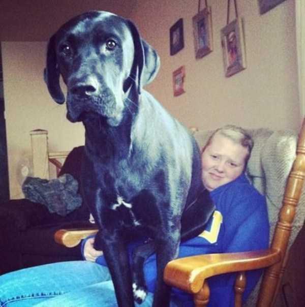 really-big-dogs (10)