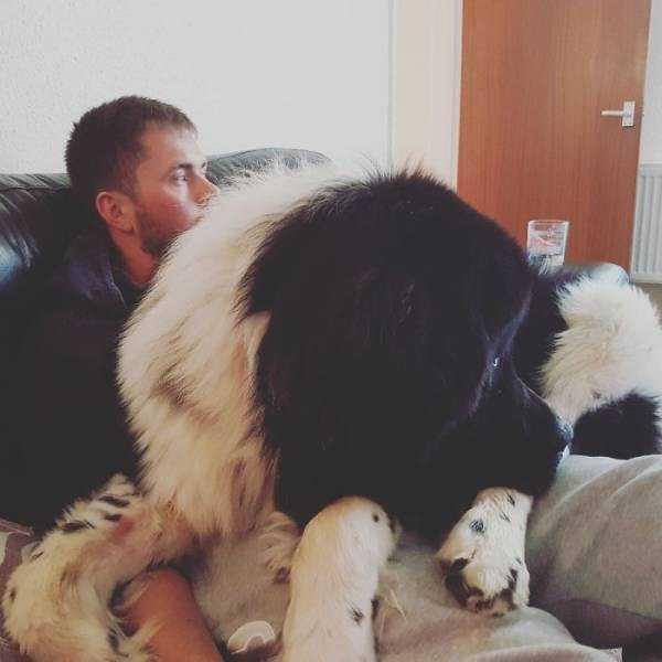 really-big-dogs (13)