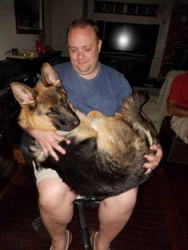 really-big-dogs (14)
