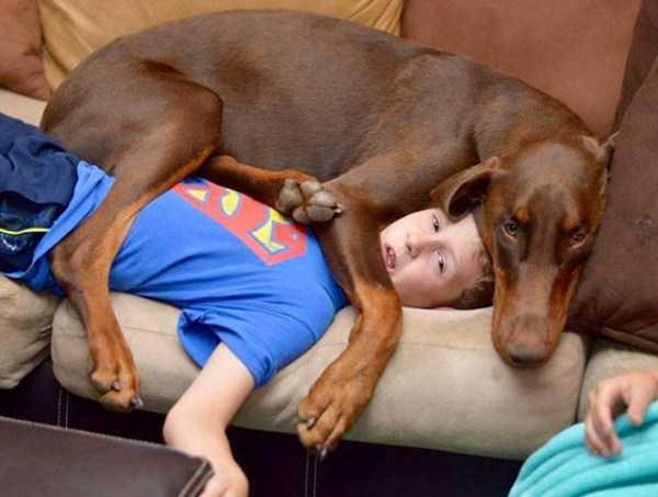 really-big-dogs (16)