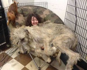 really-big-dogs (17)