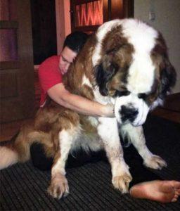 really-big-dogs (18)