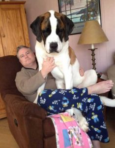 really-big-dogs (20)