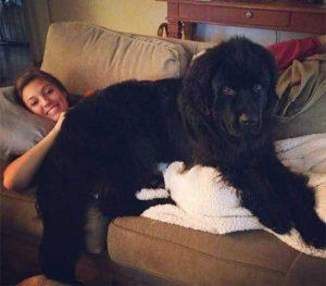 really-big-dogs (23)