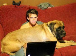 really-big-dogs (26)