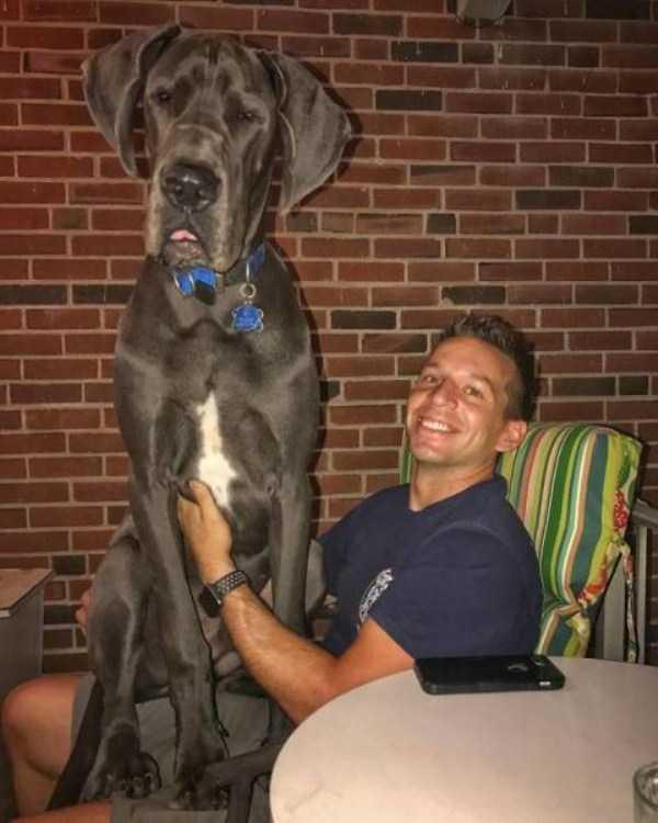 really-big-dogs (3)