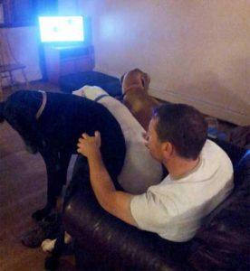 really-big-dogs (32)