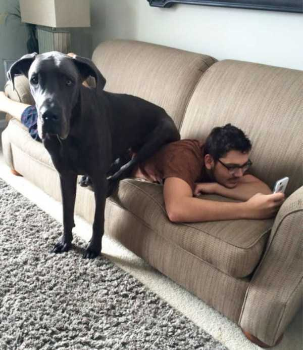 really-big-dogs (33)