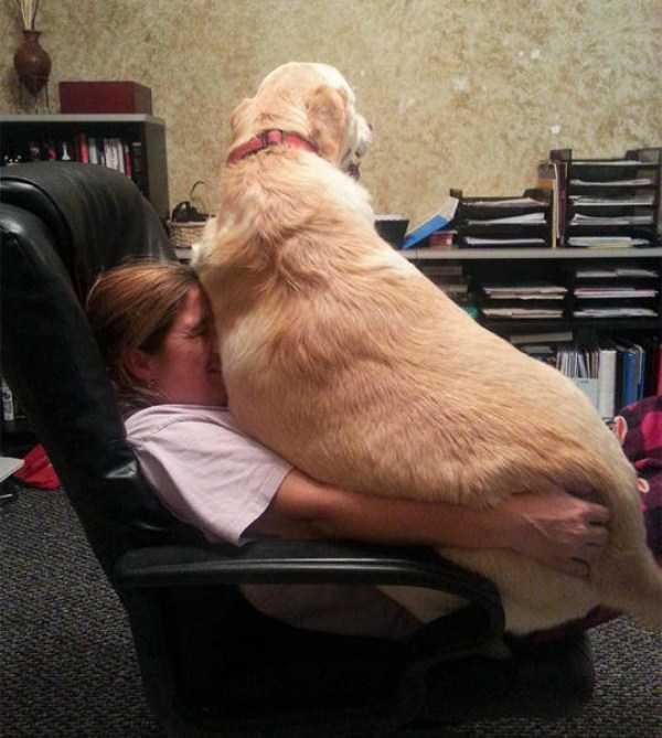 really-big-dogs (36)