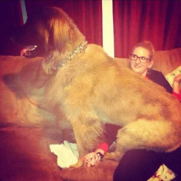 really-big-dogs (38)