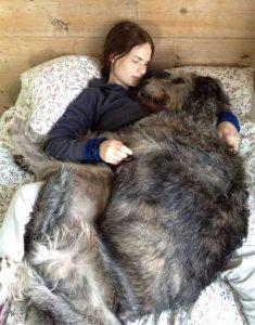 really-big-dogs (42)