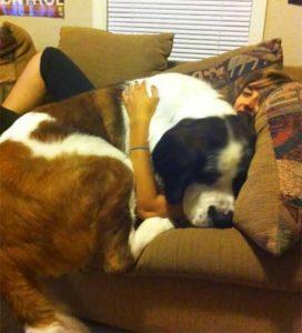 really-big-dogs (49)