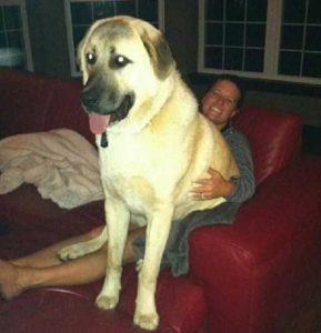 really-big-dogs (8)