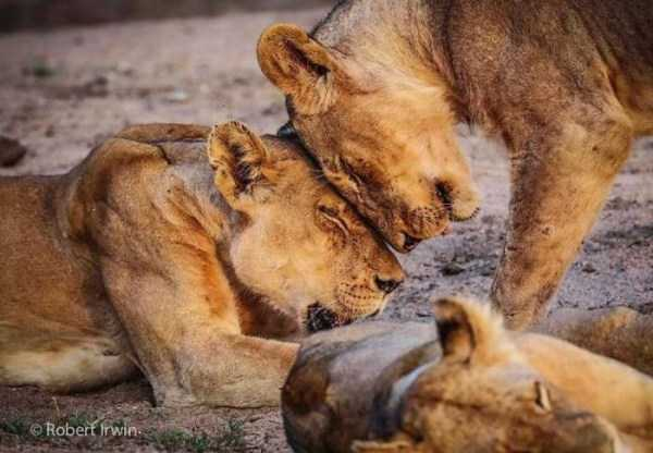 robert-irwin-wildlife-photos (1)