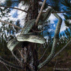 robert-irwin-wildlife-photos (11)