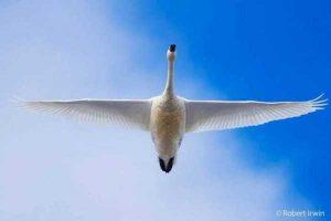robert-irwin-wildlife-photos (14)