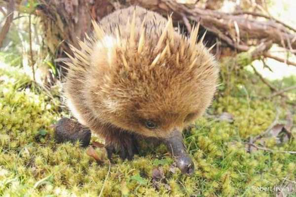 robert-irwin-wildlife-photos (15)