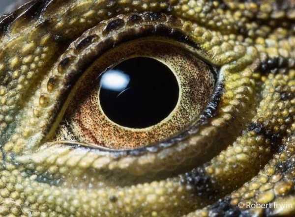 robert-irwin-wildlife-photos (16)