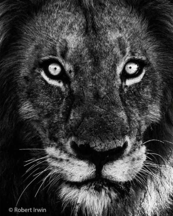 robert-irwin-wildlife-photos (17)