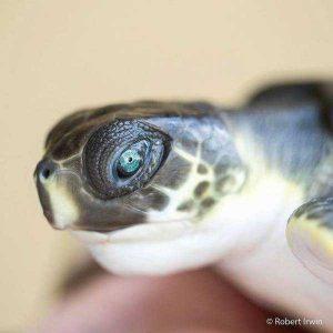 robert-irwin-wildlife-photos (19)