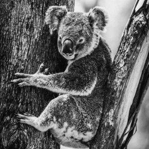 robert-irwin-wildlife-photos (2)
