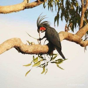 robert-irwin-wildlife-photos (20)
