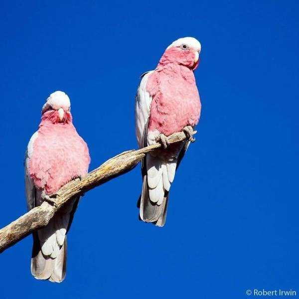 robert-irwin-wildlife-photos (25)