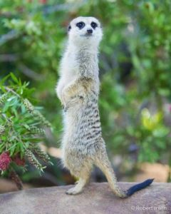 robert-irwin-wildlife-photos (26)