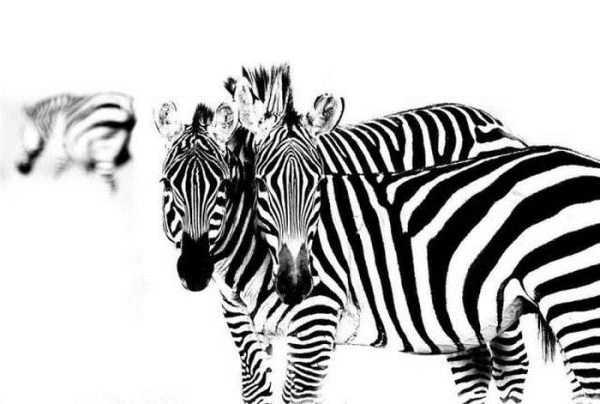 robert-irwin-wildlife-photos (3)