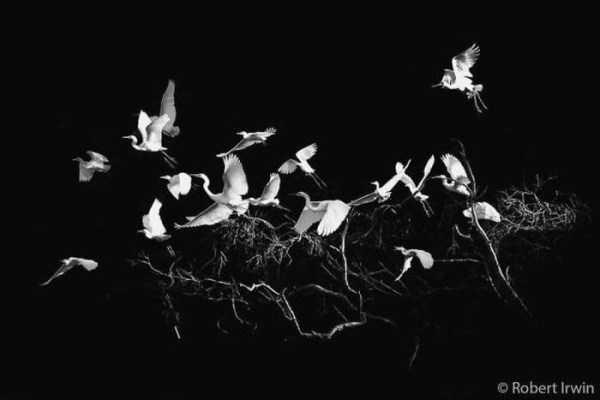 robert-irwin-wildlife-photos (30)
