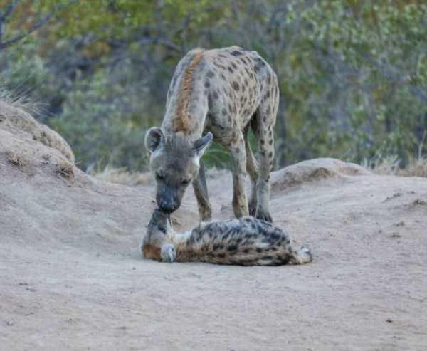robert-irwin-wildlife-photos (34)