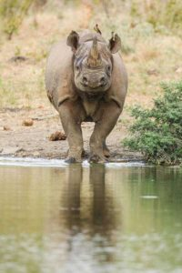 robert-irwin-wildlife-photos (35)