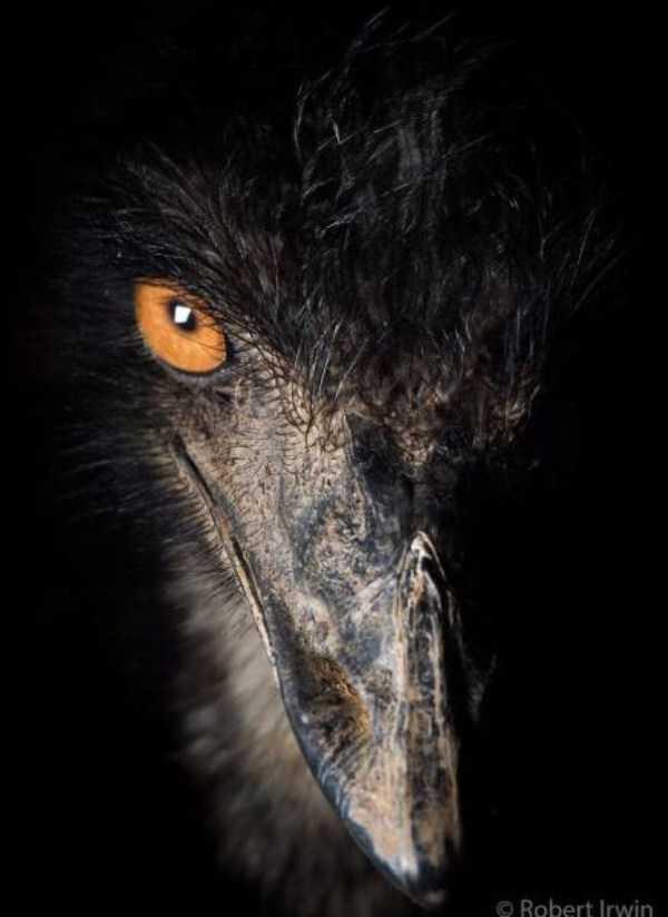 robert-irwin-wildlife-photos (37)