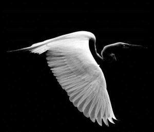robert-irwin-wildlife-photos (4)