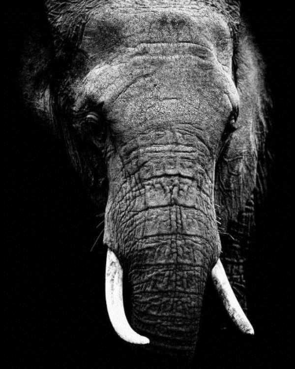robert-irwin-wildlife-photos (5)