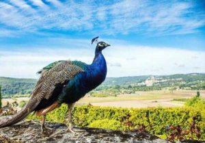 robert-irwin-wildlife-photos (6)