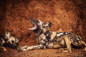 robert-irwin-wildlife-photos (7)