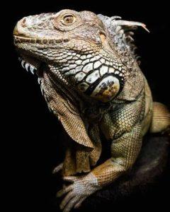 robert-irwin-wildlife-photos (8)