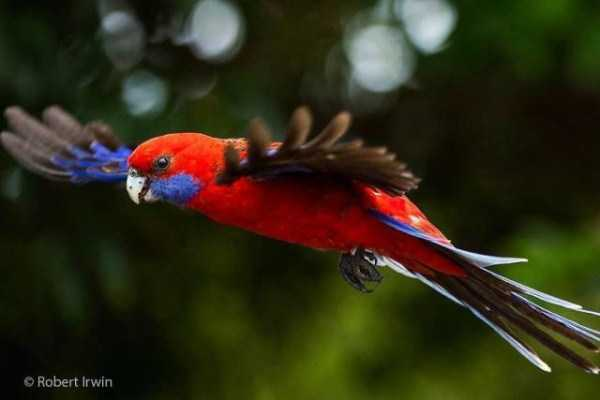 robert-irwin-wildlife-photos (9)