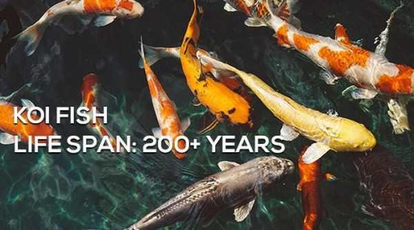 animals-lifespan (2)